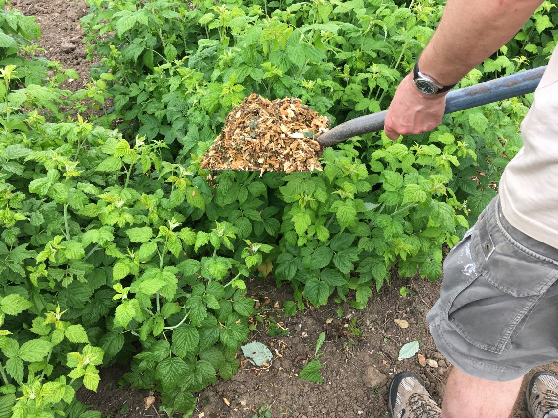 Mulching How To Mulch Your Garden Types Of Mulch The Old Farmer S Almanac