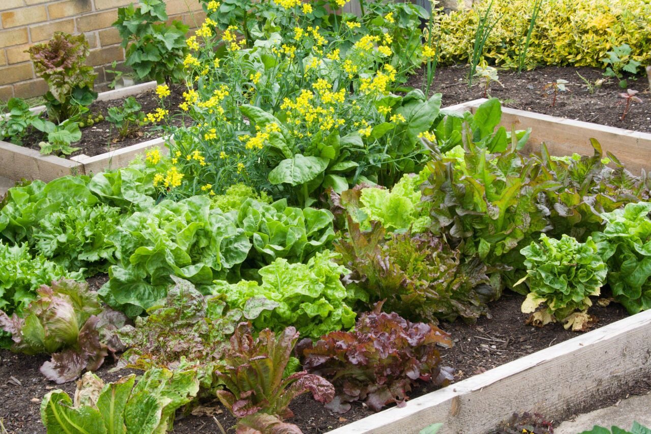 Small Vegetable Garden Plans Layouts | The Old Farmer's ... on Backyard Layout Planner id=56131