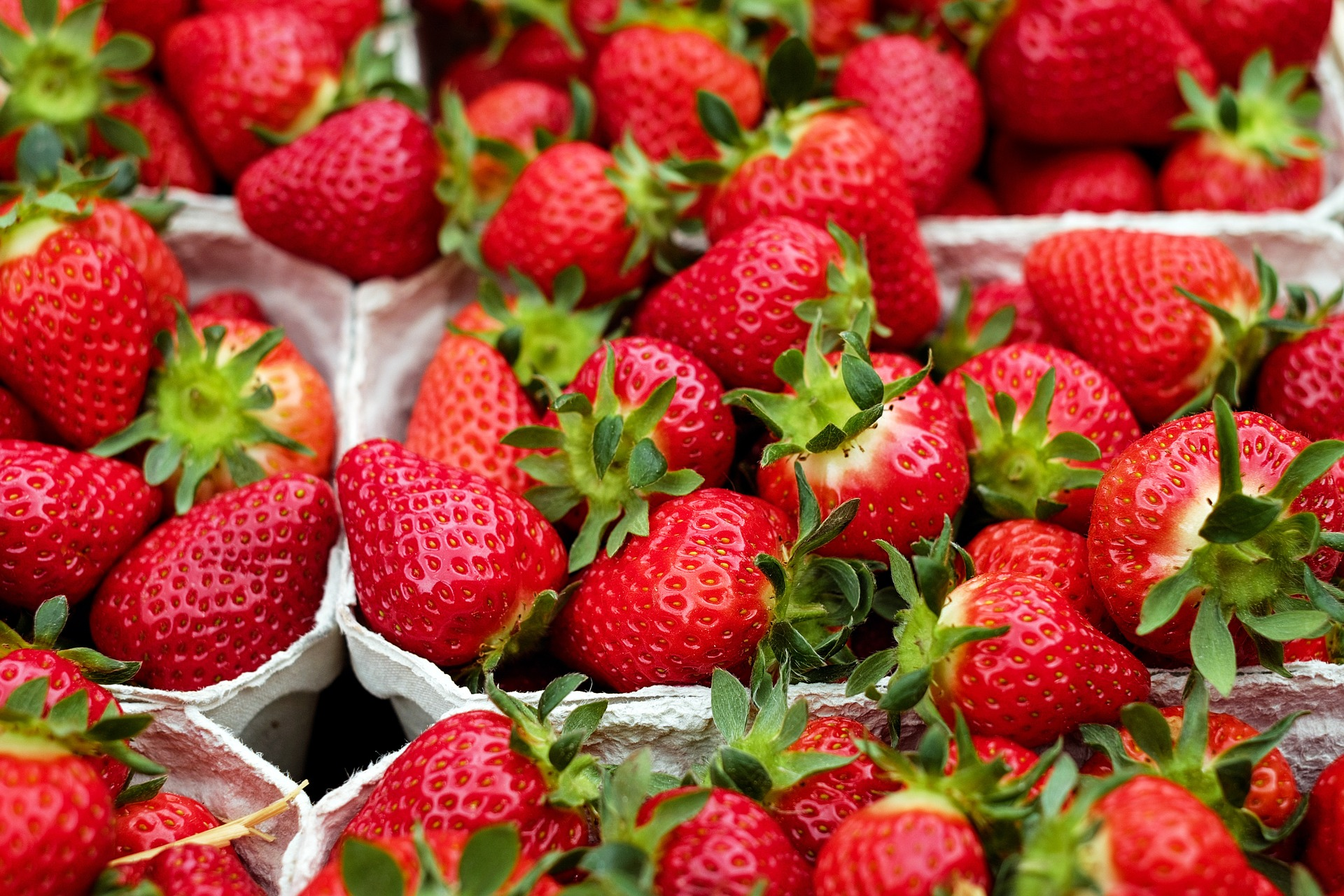 Strawberries Planting Growing And Harvesting Strawberry