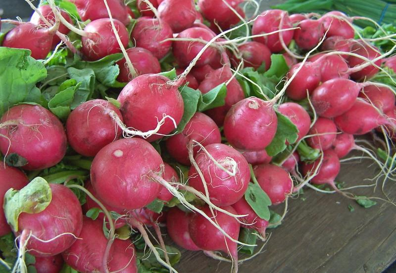 Radishes Planting Growing And Harvesting Radishes The