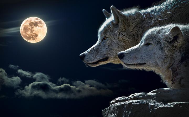 """Képtalálat a következőre: """"Wolf Full Moon"""""""