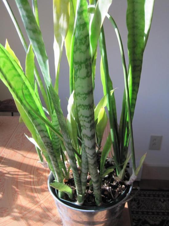 houseplants_002_full_width.jpg
