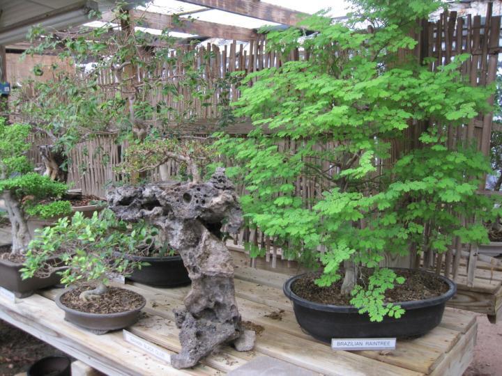 wimberley_bonsai_006_full_width.jpg