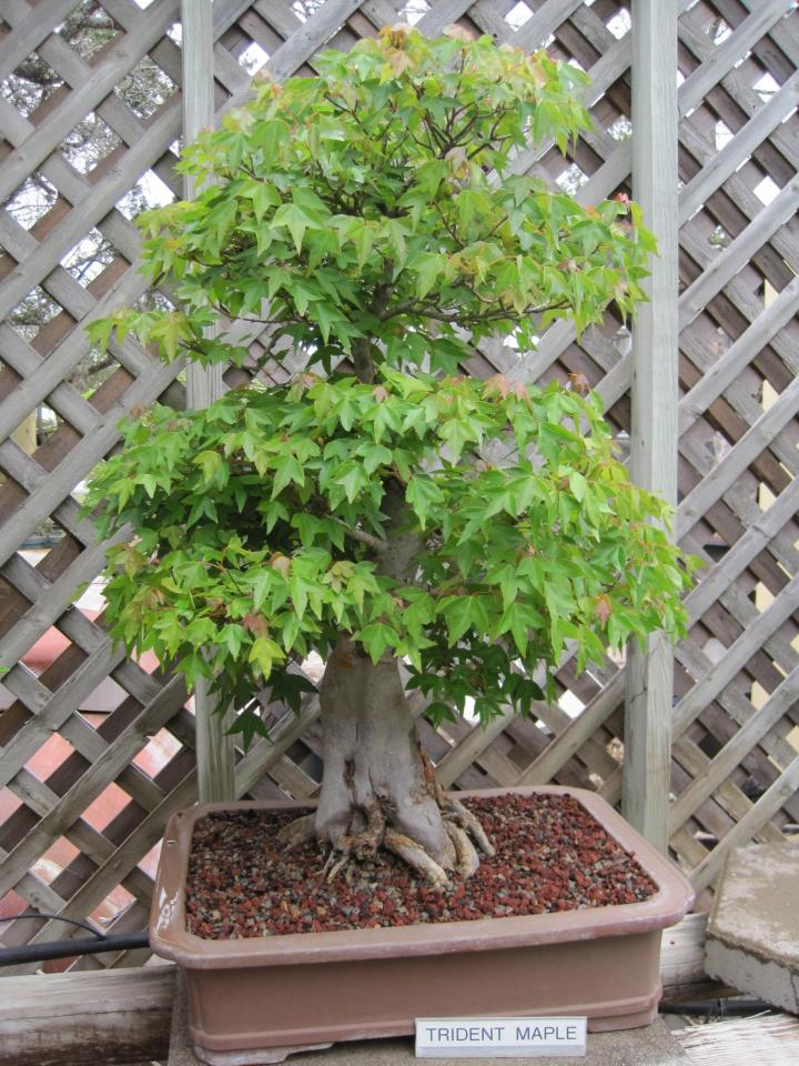 wimberley_bonsai_009_full_width.jpg
