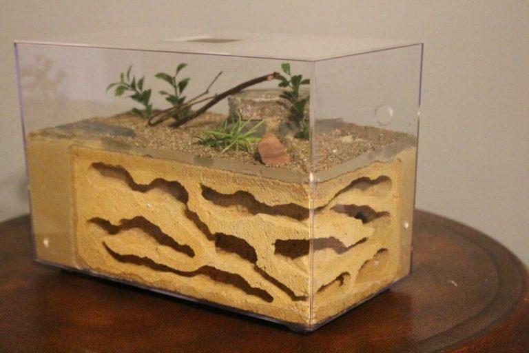 Cómo crear tu primera granja de hormigas