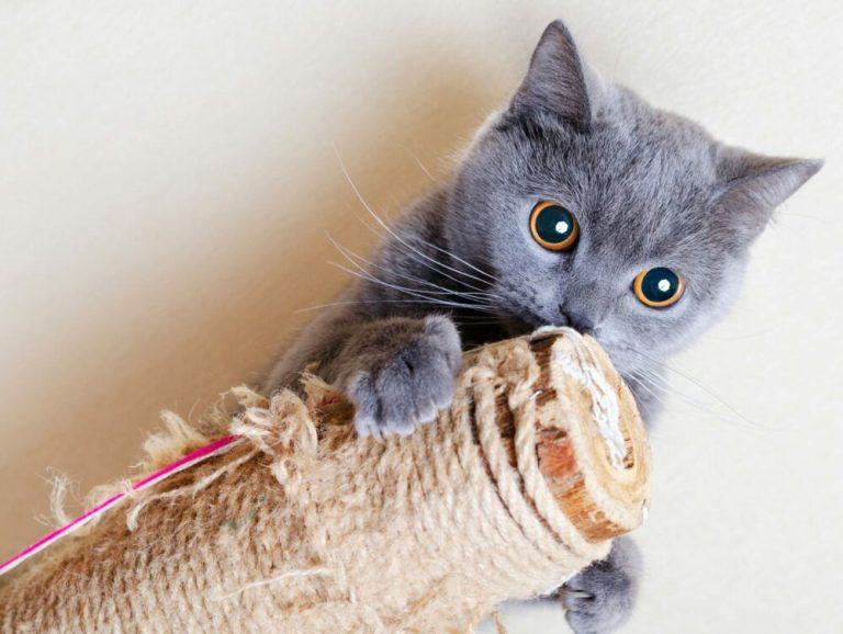 mejores rascadores para gatos por menos de 50 euros