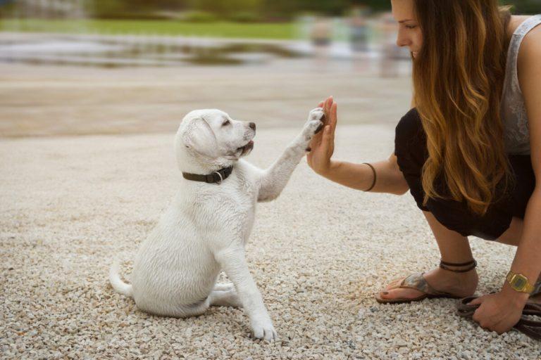 Cómo enseñar a un cachorro su nombre