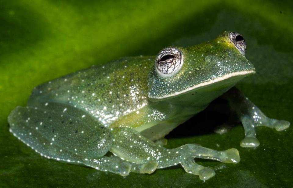 anfibios y otros peces que respiran por la piel