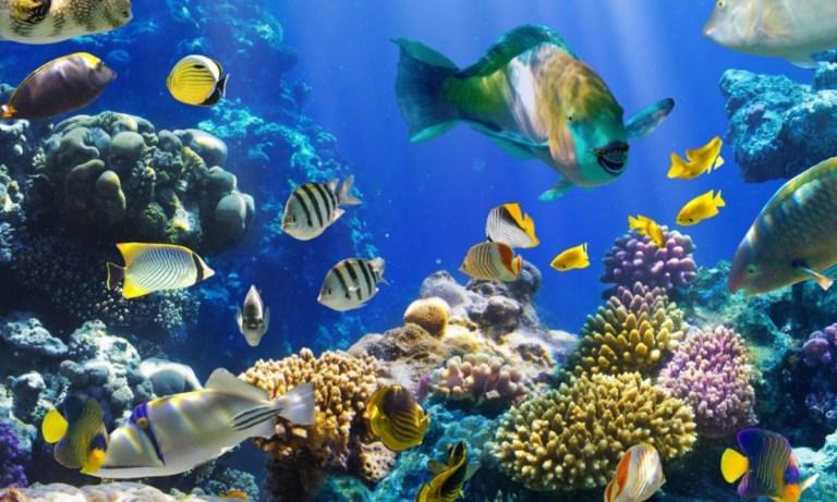 ¿Cómo respiran los peces bajo el agua y cómo lo hacen otros animales?