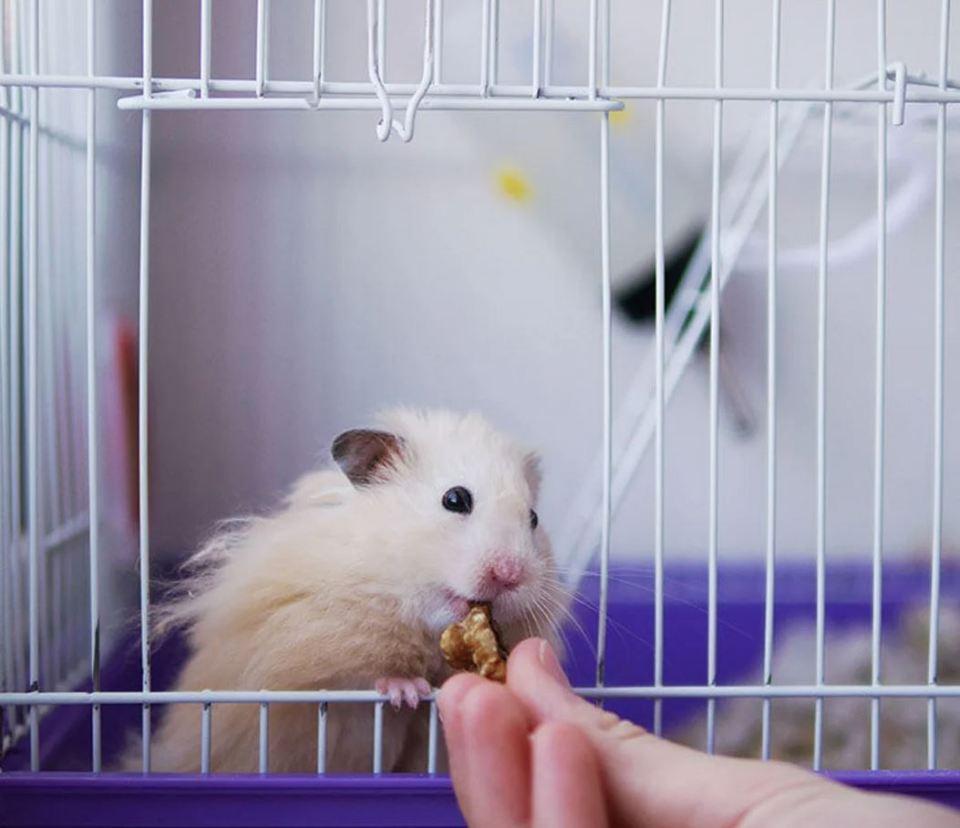 jaulas para hamster con pisos