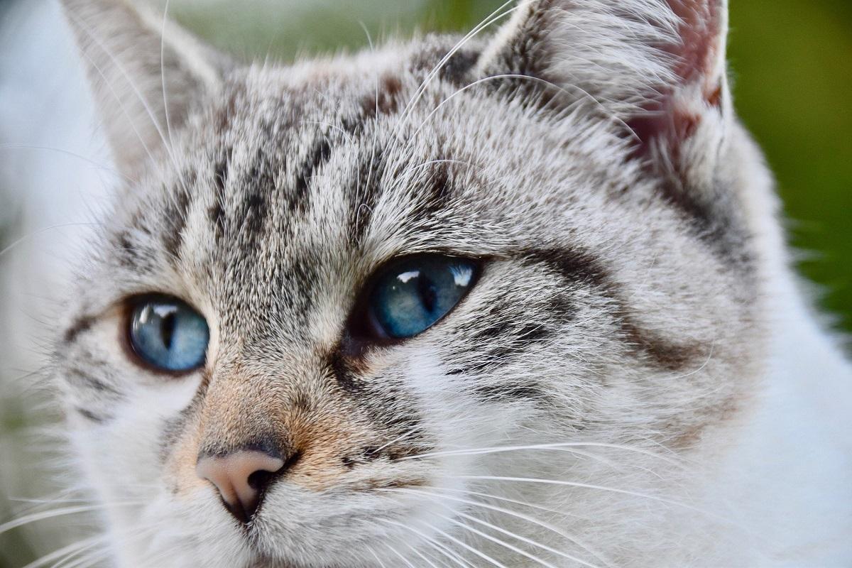 La diarrea en gatos, qué hacer