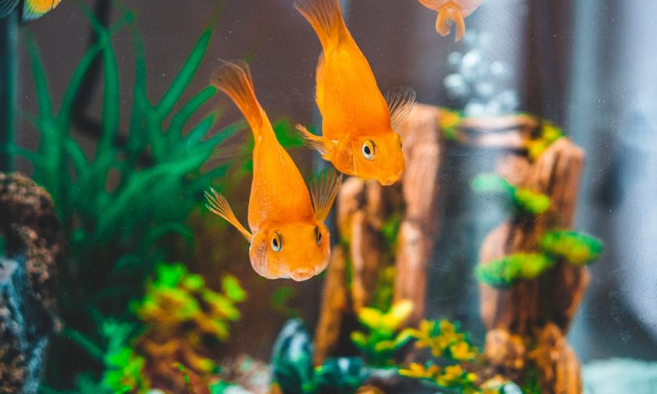 Cómo hacer un acuario de agua caliente paso a paso para peces tropicales