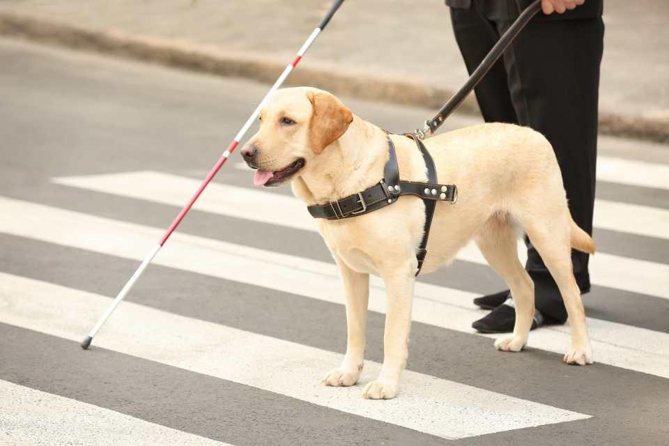 Cuándo solicitar un perro guía