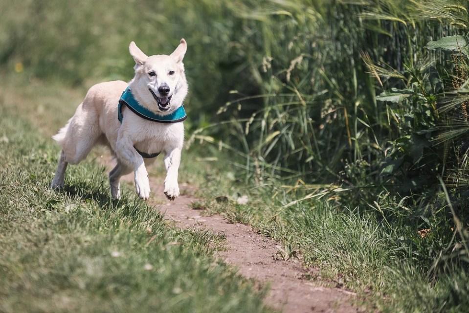 Comparativa collares antiparasitarios para perros
