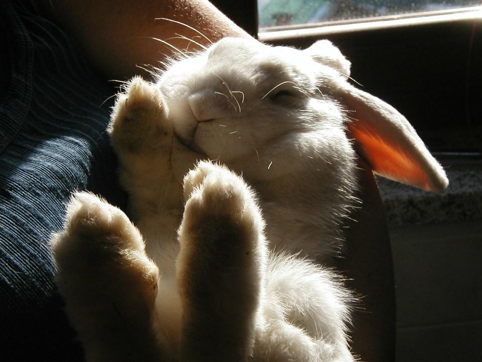 Esto es lo que necesitas según nuestra guía para tener un conejo en casa
