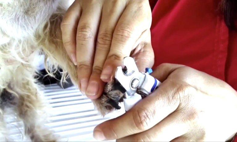 cómo cortar las uñas a tu perro