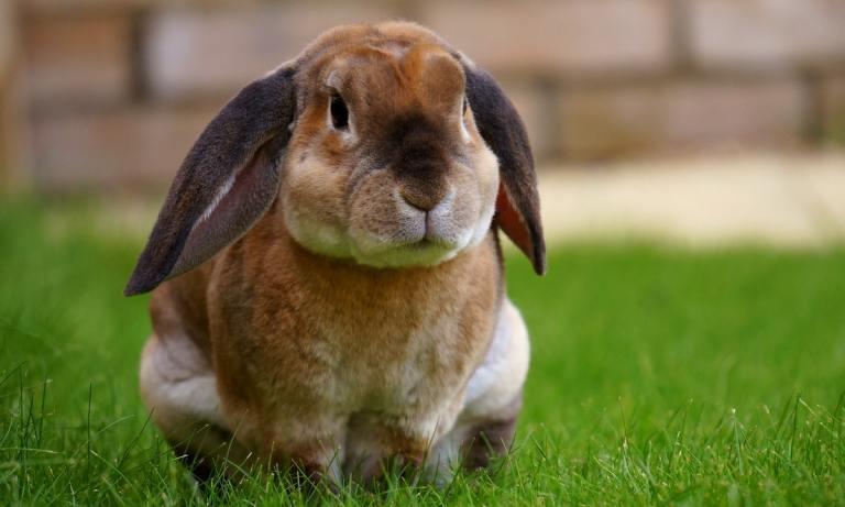 Guía para tener un conejo en casa y los accesorios que necesita