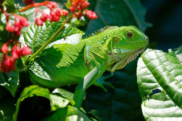 peligros de liberar animales exóticos en la naturaleza