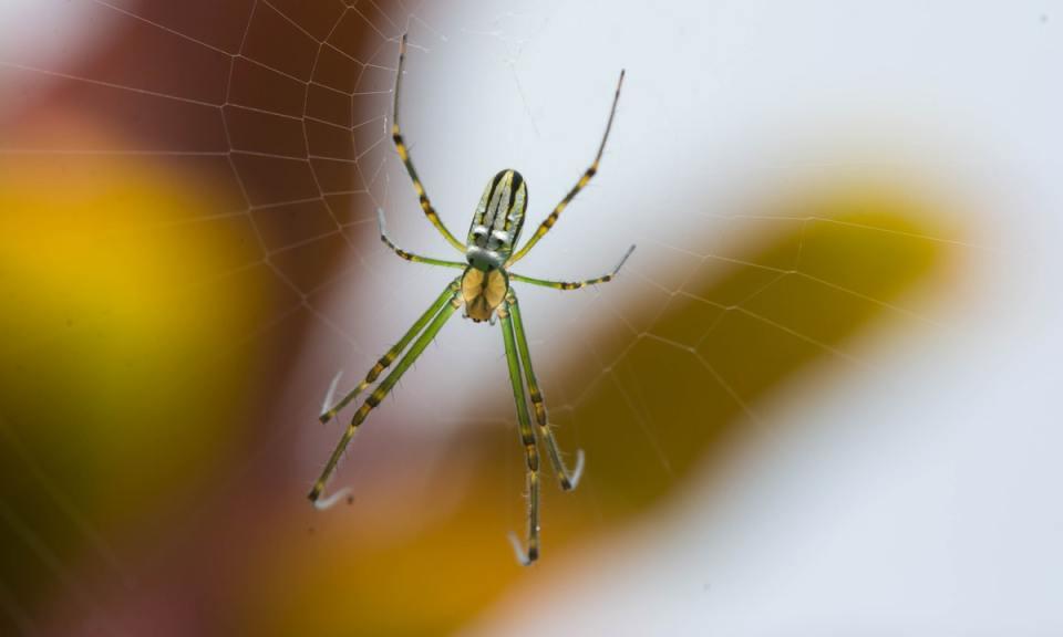 Cómo tratar el miedo a las arañas o aracnofobia