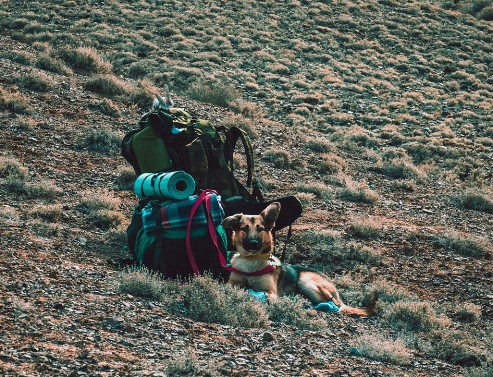 Acampar o ir de camping con un perro es posible