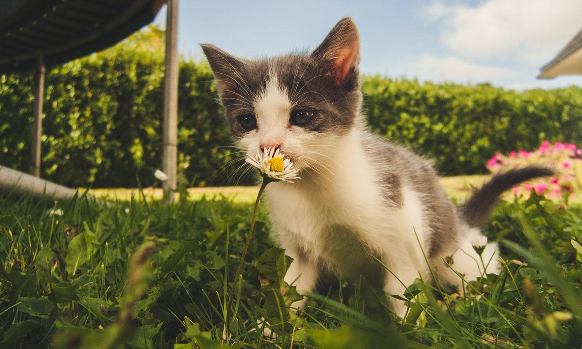 Cómo introducir un gatito en casa si ya tienes otras mascotas