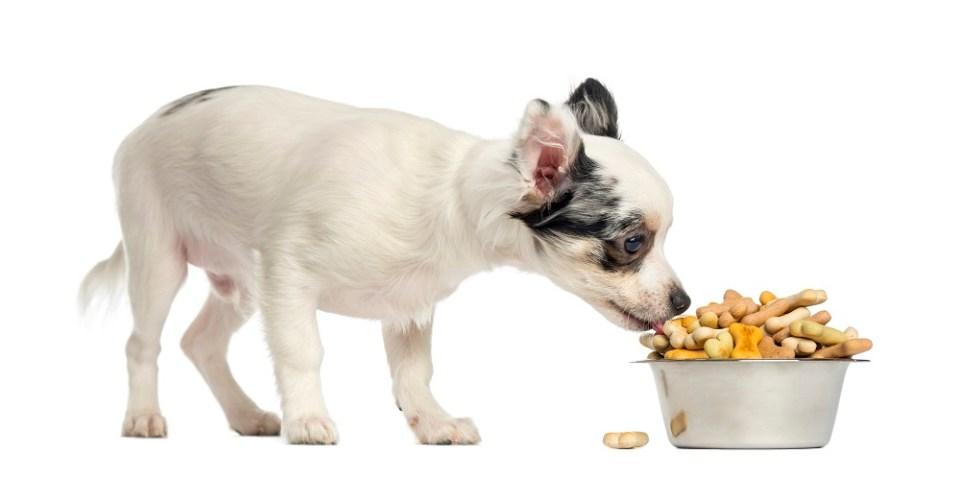 Evitar azúcares y dulces en perros