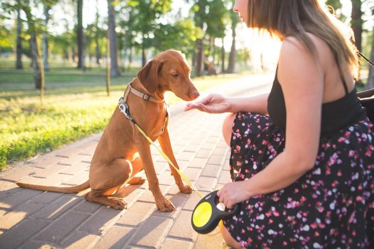 Cómo de peligrosos son el azúcar y dulces para los perros