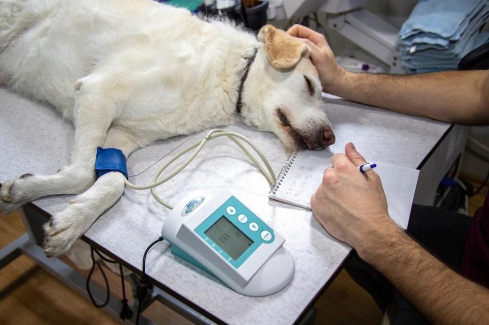Consejos para escoger el mejor veterinario