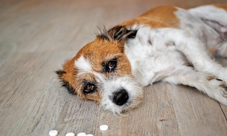 medicamentos peligrosos en mascotas