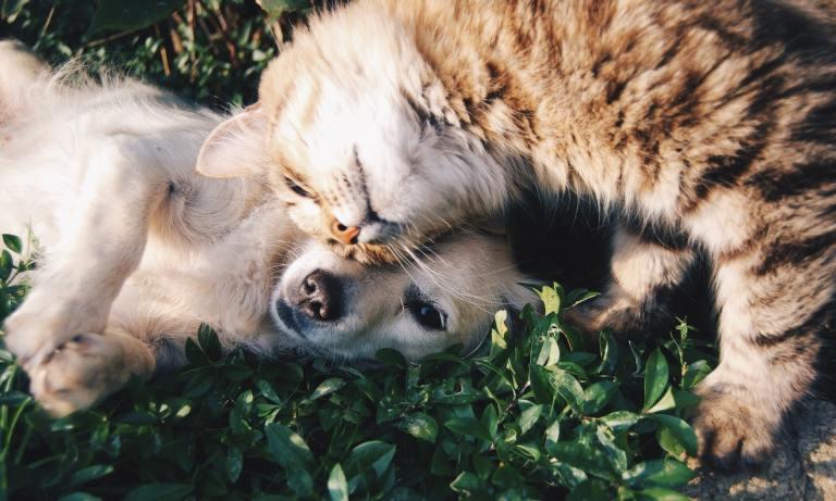 Consejos sobre cuidado de mascotas