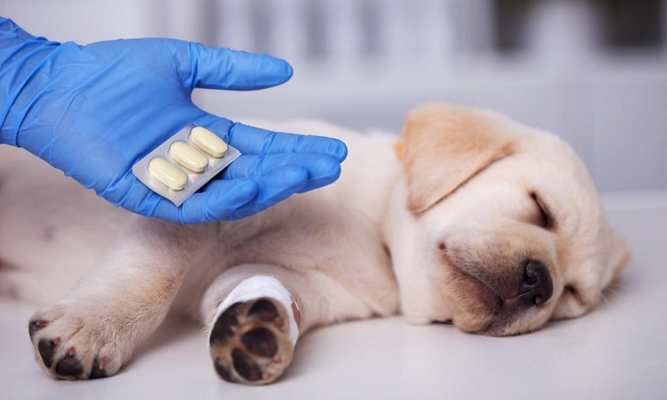 medicamentos de humanos peligrosos para mascotas