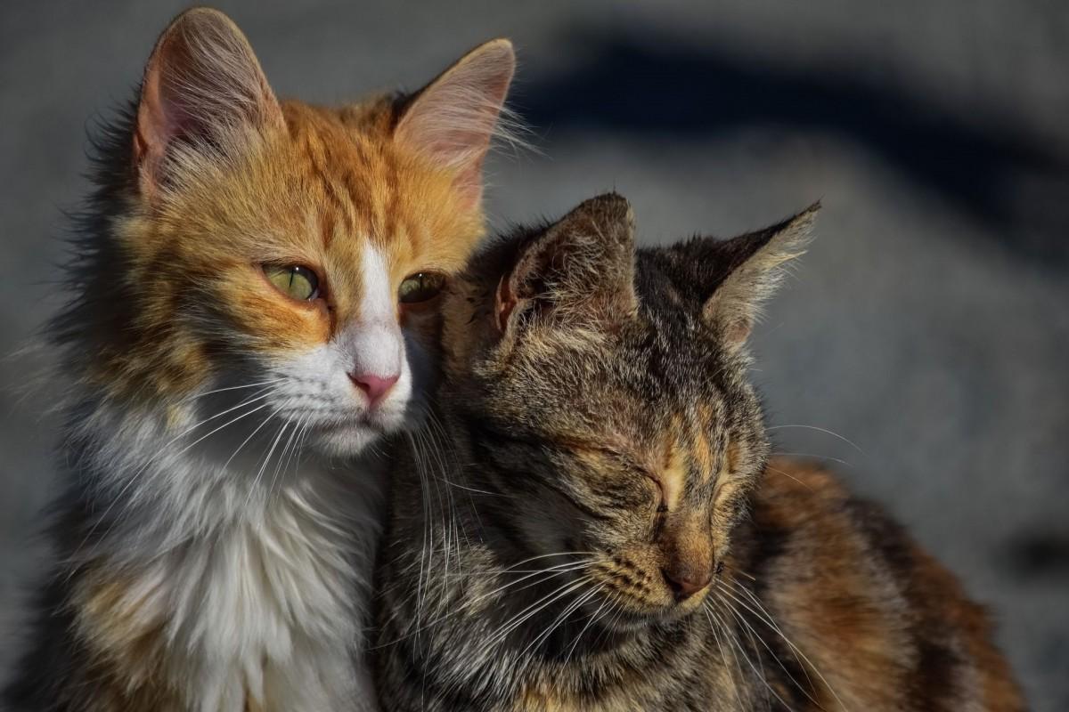 Nombres originales y bonitos para gatos
