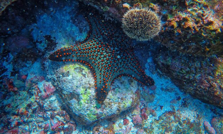 Descubre cómo se regenera una estrella de mar