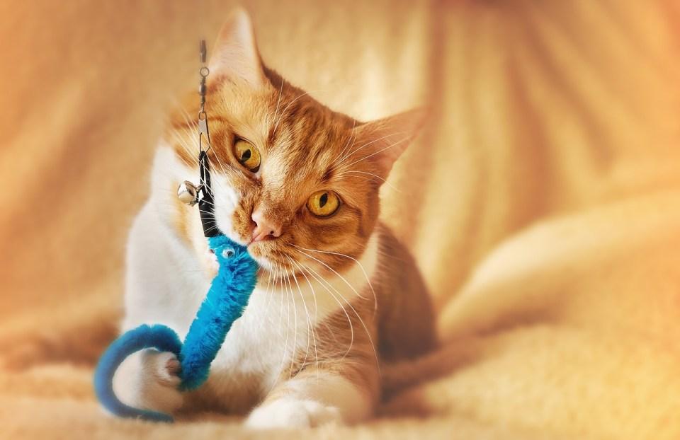 No puedes cambiar a tu gato, pero sí ayudarlo a redirigir sus instintos a través del juego