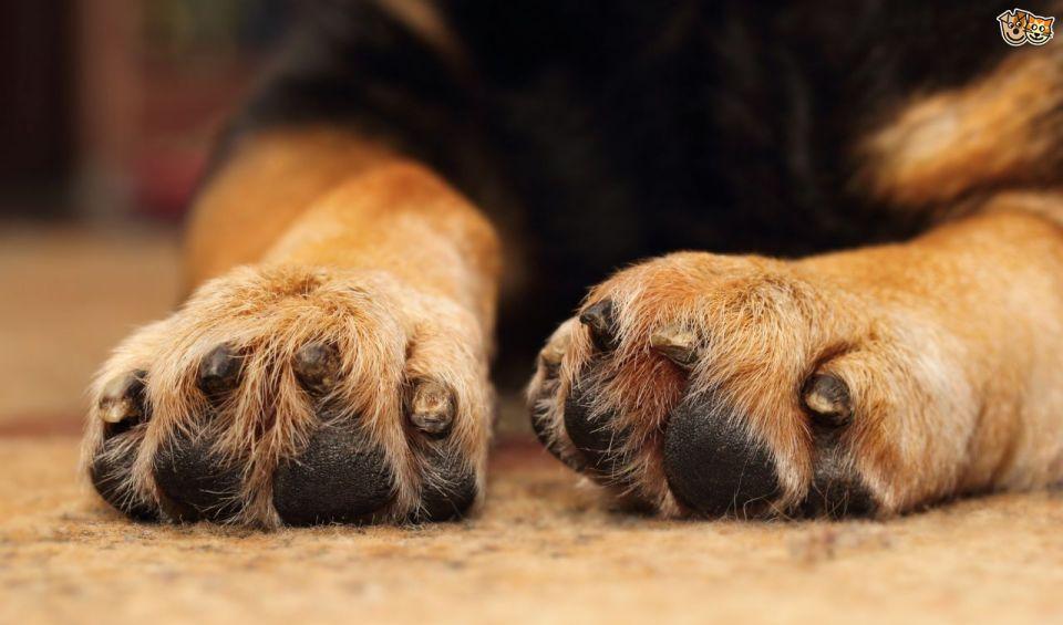 Mejores limas de uñas para perros