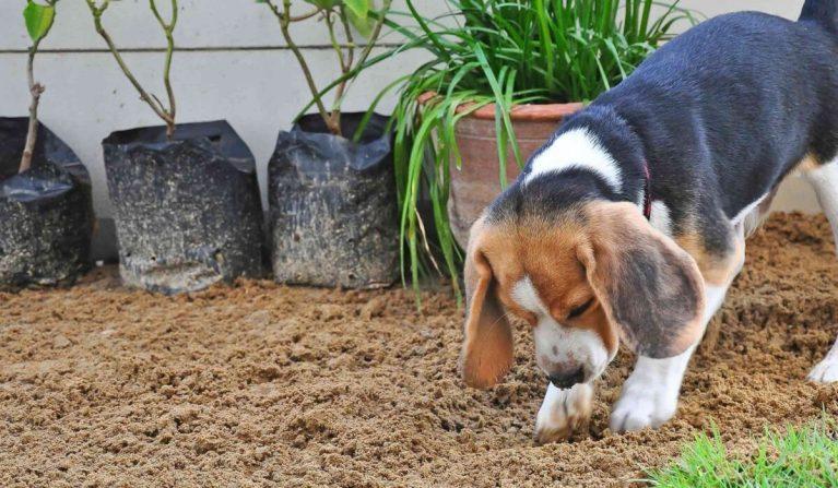 perros entierran su comida