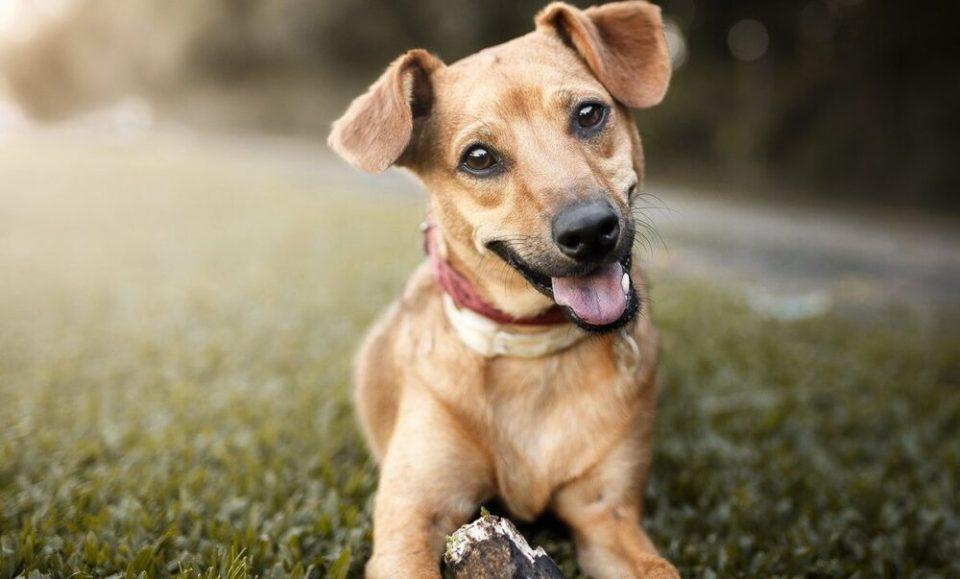 ventajas de adoptar a un perro sin raza