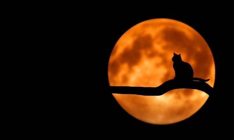 Descubre si el mes de octubre es un peligro para los gatos blancos y negros