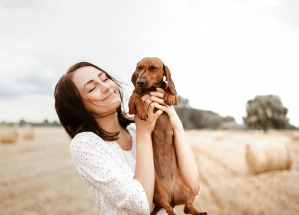 Se otorgan hasta horas para llevar a la mascota al veterinario