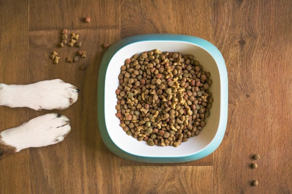 Todo sobre la comida deshidratada para perros
