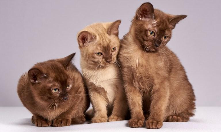 Consejos para tener tu primer gato
