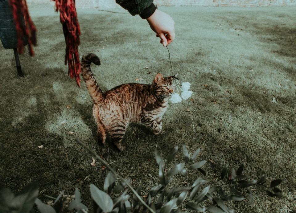 ¿Qué hacer con un gato abandonado? Lo primero es observarlo.