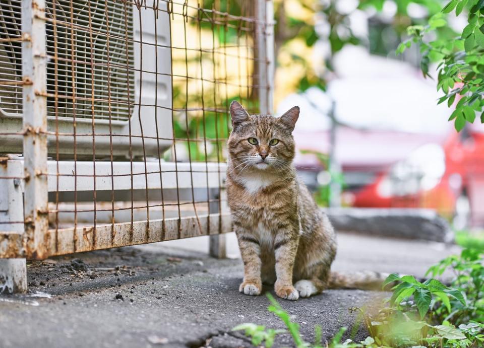 Debes de tener cuidado si te encuentras con un gato salvaje en la calle