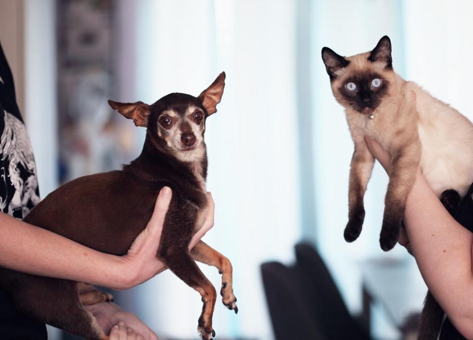 La vitamina E para perros y gatos es sumamente importante si queremos verlos sanos
