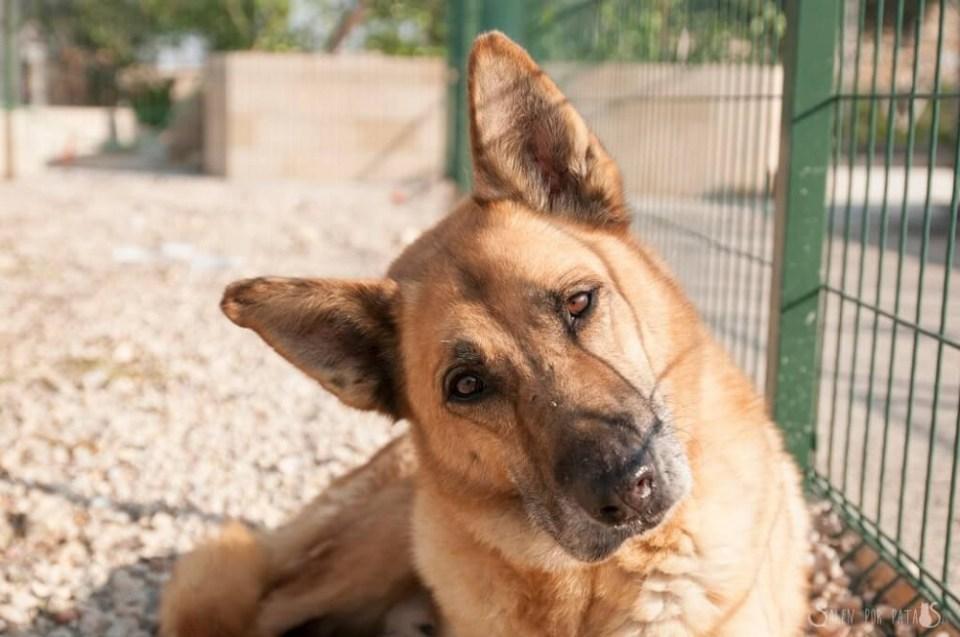 Timot está disponible para adoptar en Murcia