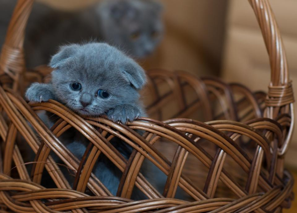 Para adoptar un gato en Madrid debes de cumplir una serie de requisitos