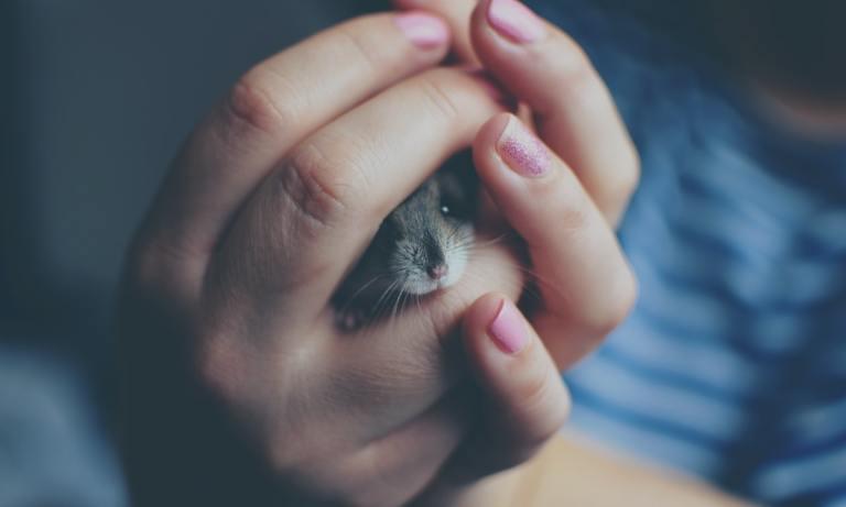 Encontrar un hámster si se ha perdido es una tarea difícil, pero no imposible
