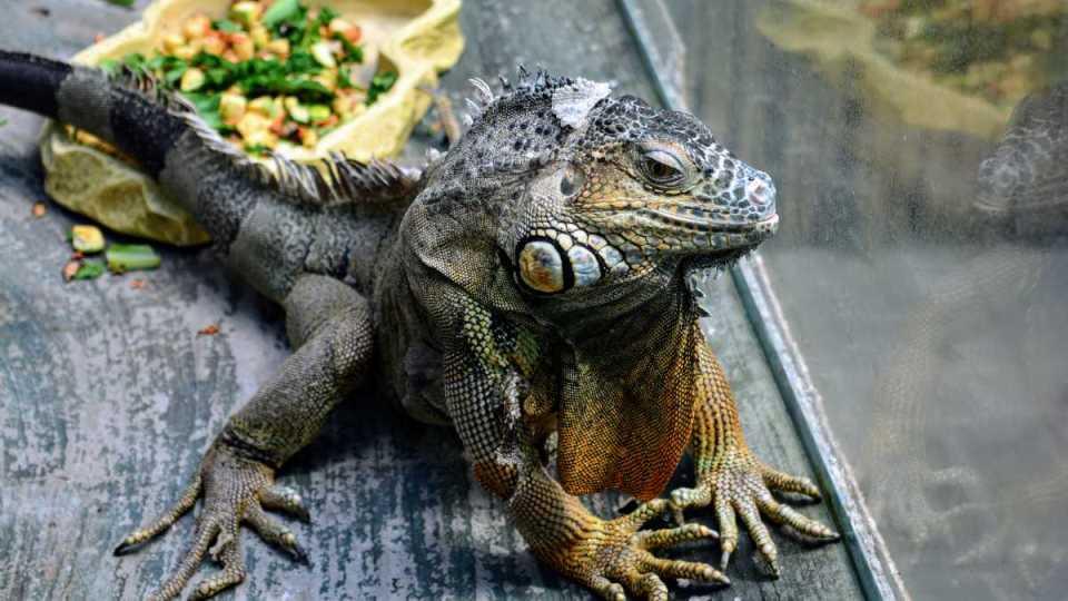 Reptiles como animales de compañía