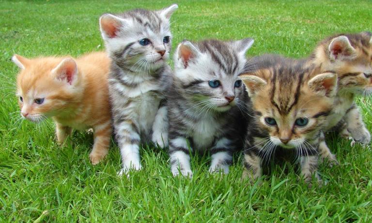Los gatos tienen memoria, una muy buena