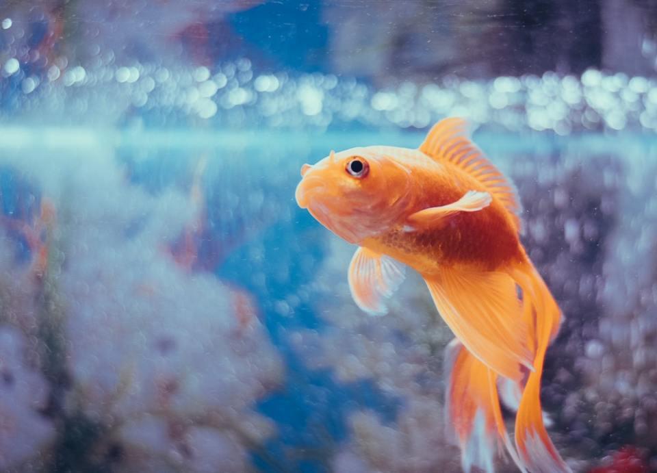 Un filtro casero para acuarios puede adaptarse a las necesidades de tus mascotas